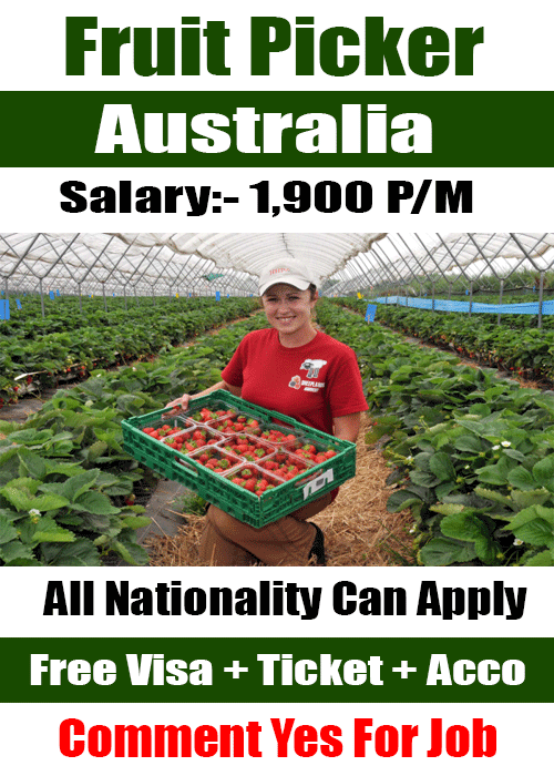 Australia fruit job